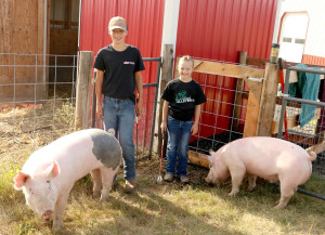 Sean and Brenna Elliott will exhibit their pigs this week at the Benewah County Fair. This is Brenna's first year showing pig; it is her brother's fifth year. Sean will also show his steer. They said they've enjoyed the projects from training to bathing. Both pigs gained weight well, they said.